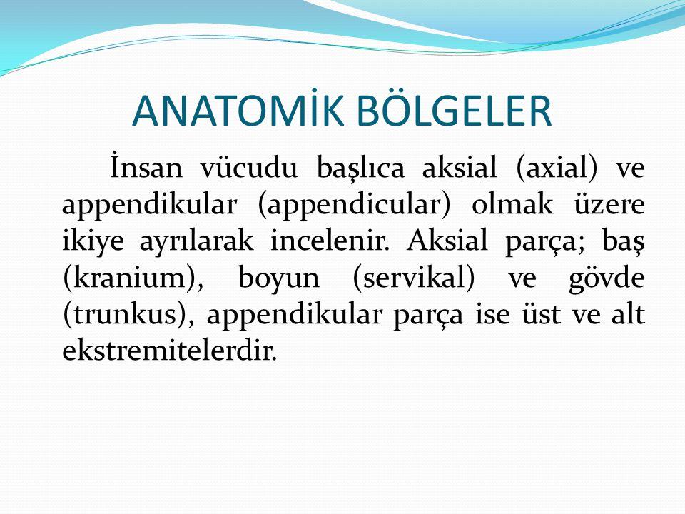 ANATOMİK BÖLGELER
