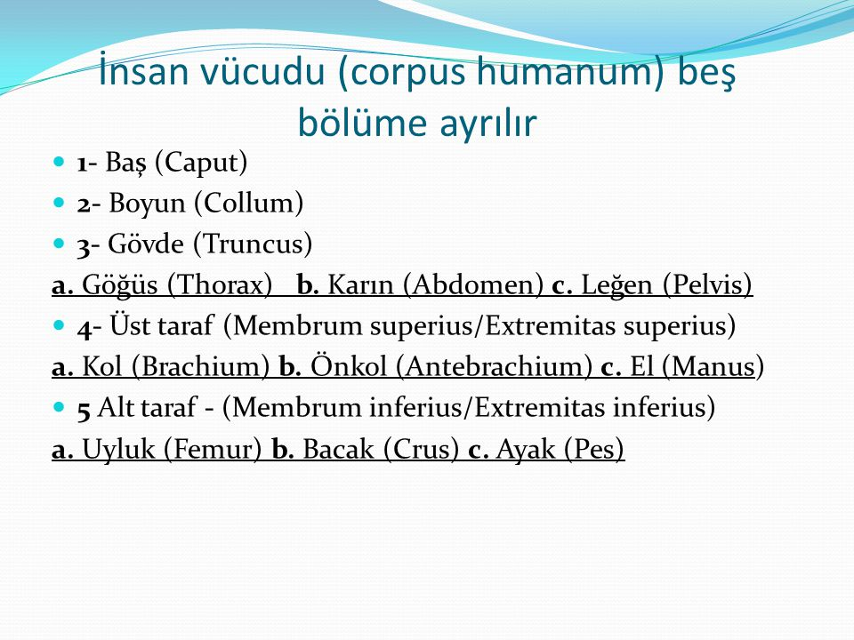 İnsan vücudu (corpus humanum) beş bölüme ayrılır