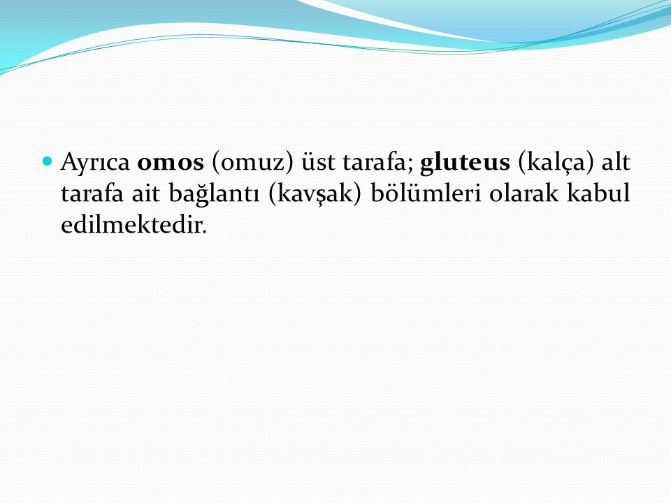Ayrıca omos (omuz) üst tarafa; gluteus (kalça) alt tarafa ait bağlantı (kavşak) bölümleri olarak kabul edilmektedir.