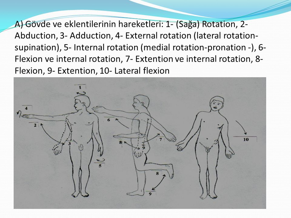A) Gövde ve eklentilerinin hareketleri: 1- (Sağa) Rotation, 2- Abduction, 3- Adduction, 4- External rotation (lateral rotation-supination), 5- Internal rotation (medial rotation-pronation -), 6- Flexion ve internal rotation, 7- Extention ve internal rotation, 8- Flexion, 9- Extention, 10- Lateral flexion