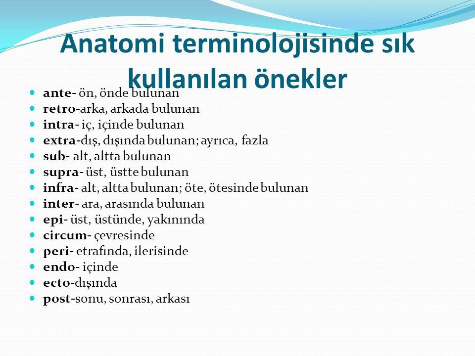 Anatomi terminolojisinde sık kullanılan önekler
