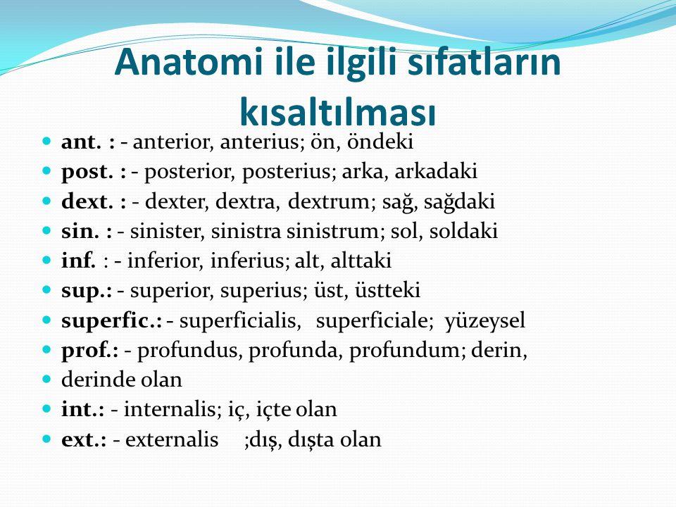 Anatomi ile ilgili sıfatların kısaltılması