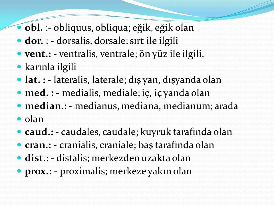 obl. :- obliquus, obliqua; eğik, eğik olan