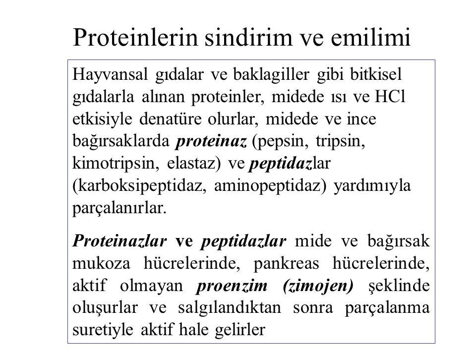 Proteinlerin sindirim ve emilimi
