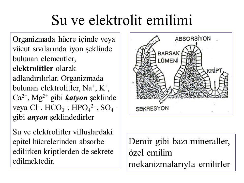 Su ve elektrolit emilimi