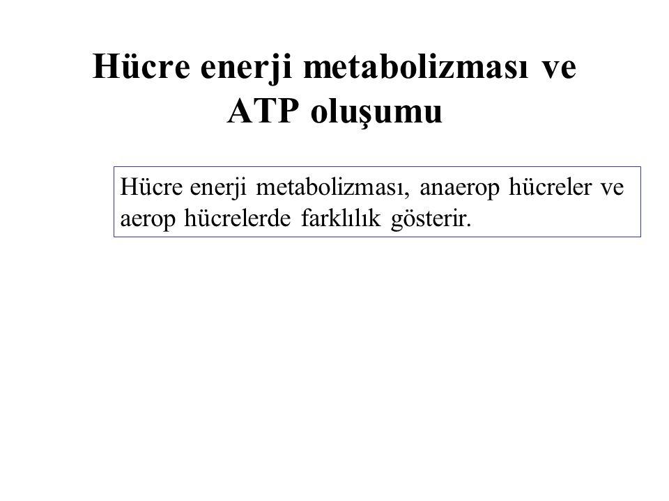 Hücre enerji metabolizması ve ATP oluşumu