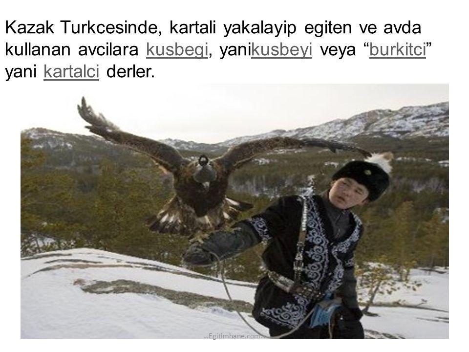 Kazak Turkcesinde, kartali yakalayip egiten ve avda kullanan avcilara kusbegi, yanikusbeyi veya burkitci yani kartalci derler.