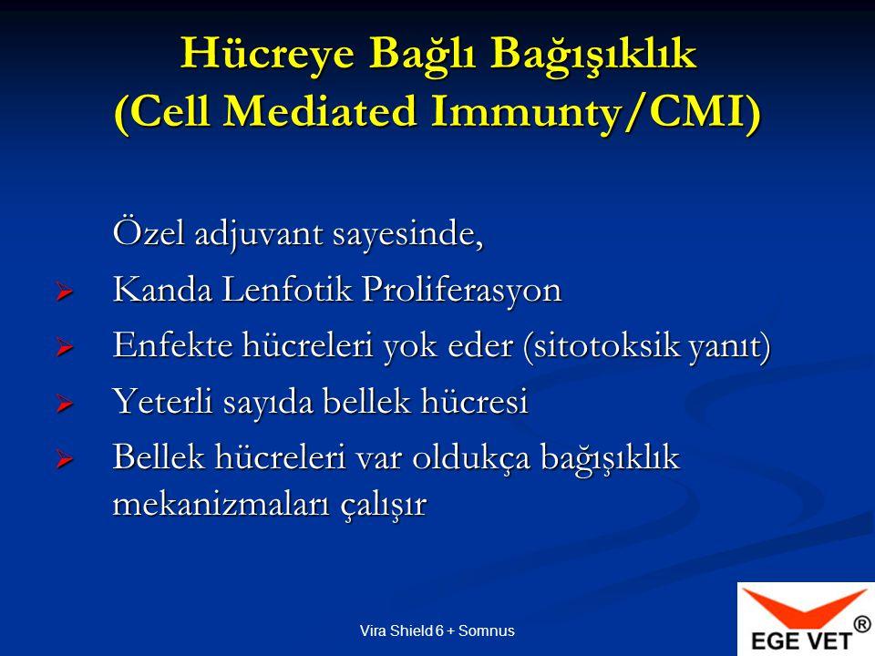 Hücreye Bağlı Bağışıklık (Cell Mediated Immunty/CMI)