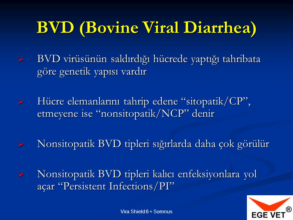 BVD (Bovine Viral Diarrhea)