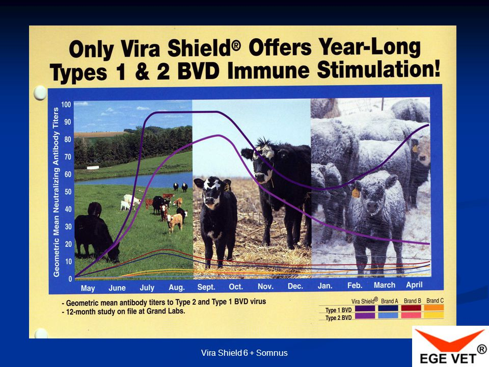 Vira Shield 6 + Somnus