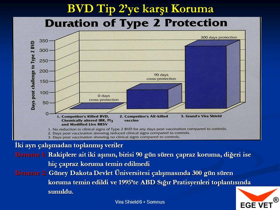 BVD Tip 2'ye karşı Koruma