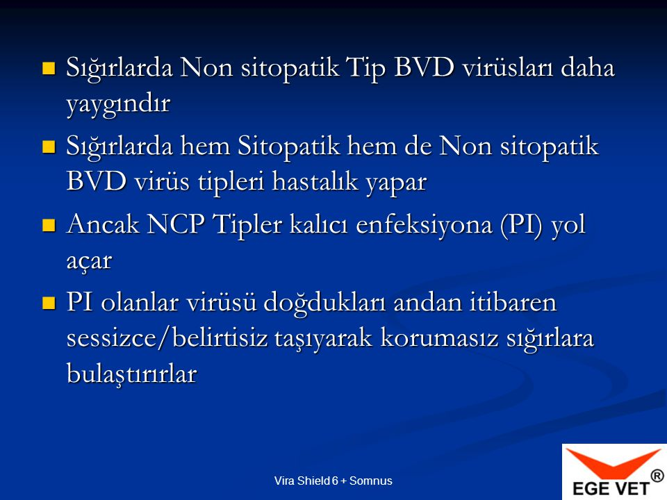 Sığırlarda Non sitopatik Tip BVD virüsları daha yaygındır