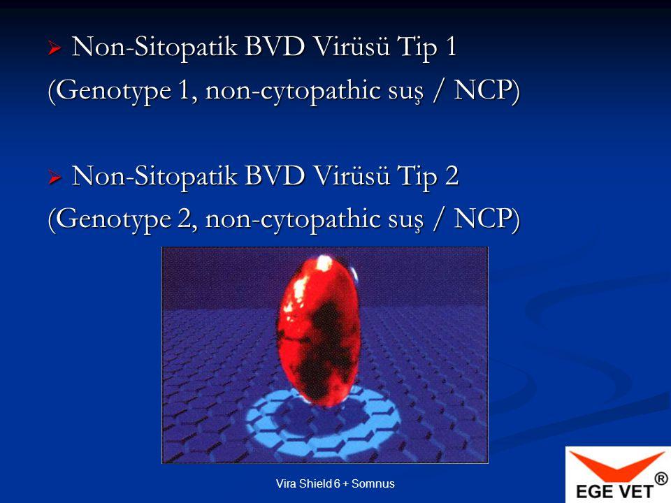 Non-Sitopatik BVD Virüsü Tip 1 (Genotype 1, non-cytopathic suş / NCP)