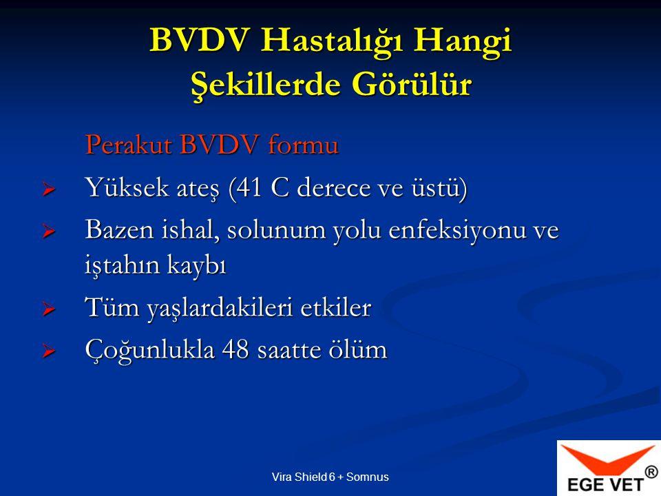 BVDV Hastalığı Hangi Şekillerde Görülür
