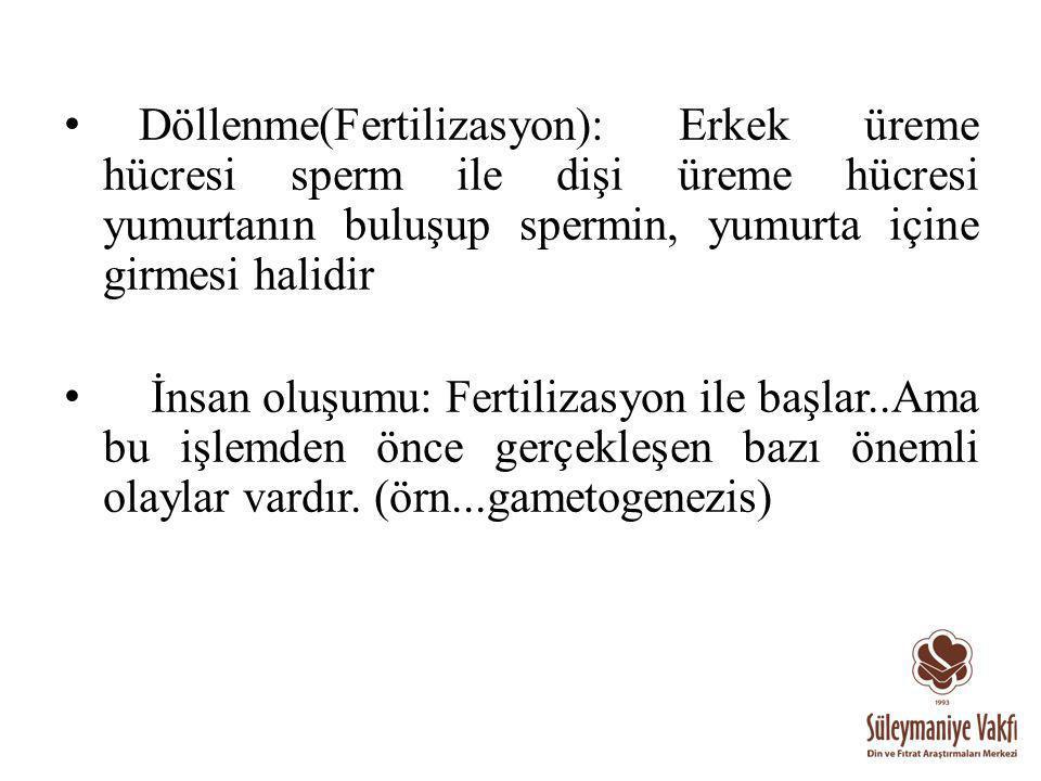 Döllenme(Fertilizasyon): Erkek üreme hücresi sperm ile dişi üreme hücresi yumurtanın buluşup spermin, yumurta içine girmesi halidir