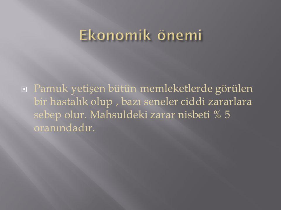 Ekonomik önemi