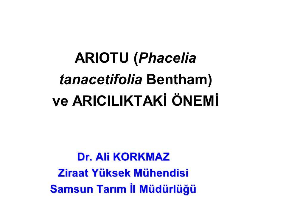 ARIOTU (Phacelia tanacetifolia Bentham) ve ARICILIKTAKİ ÖNEMİ