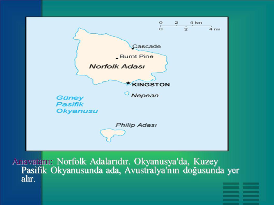 Anavatanı: Norfolk Adalarıdır