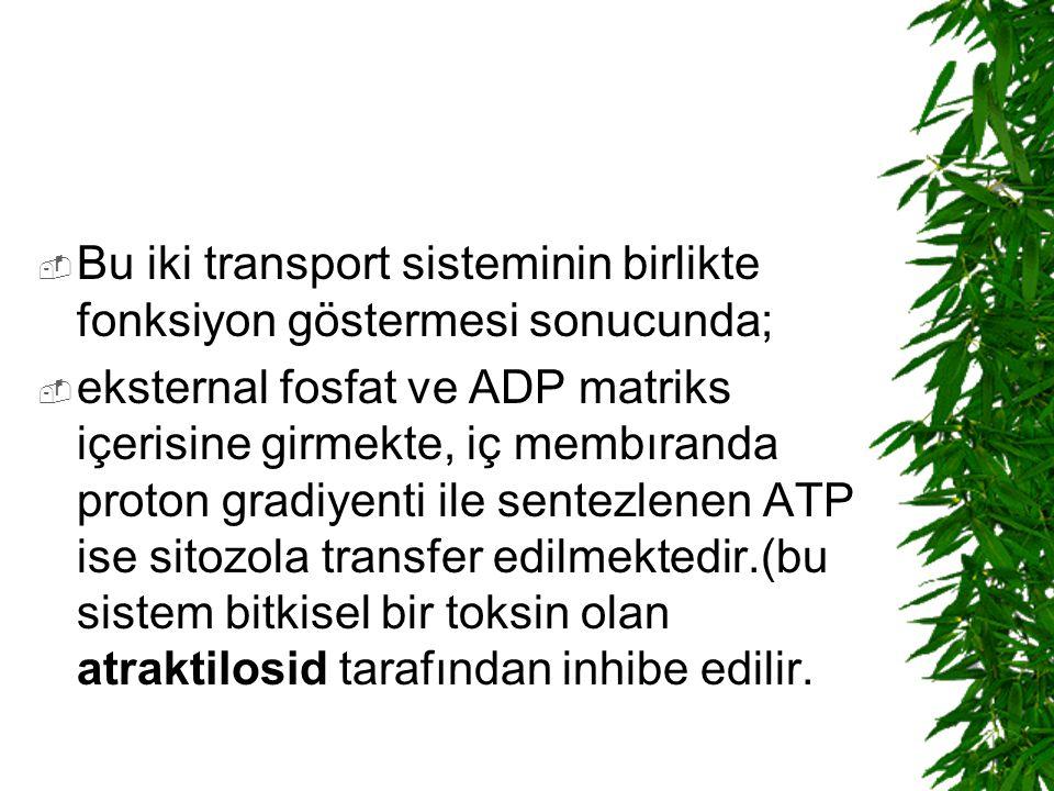 Bu iki transport sisteminin birlikte fonksiyon göstermesi sonucunda;