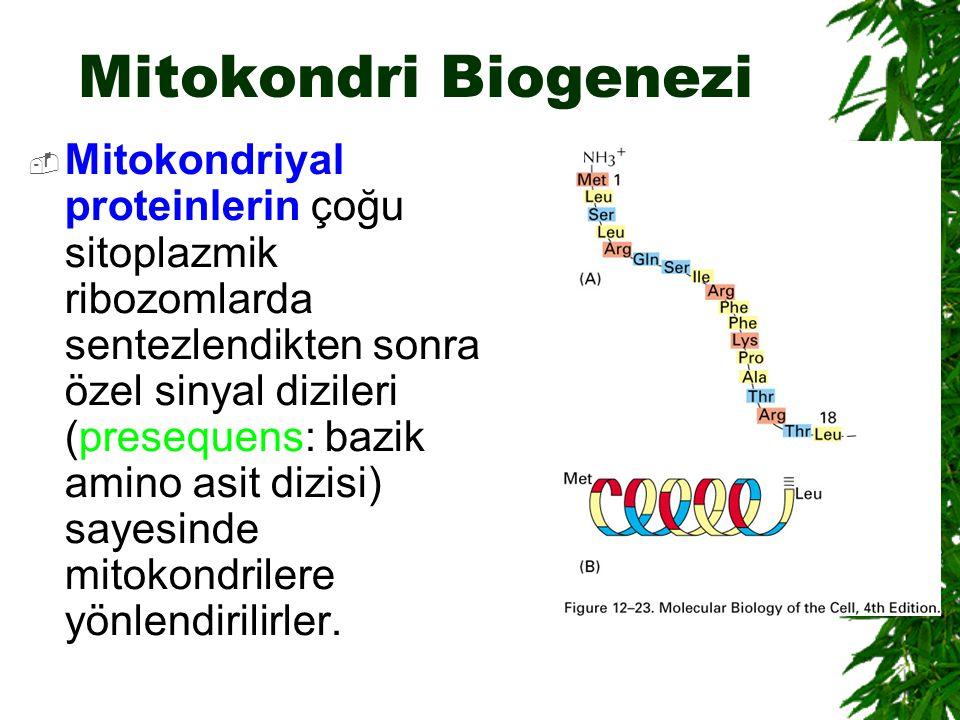 Mitokondri Biogenezi