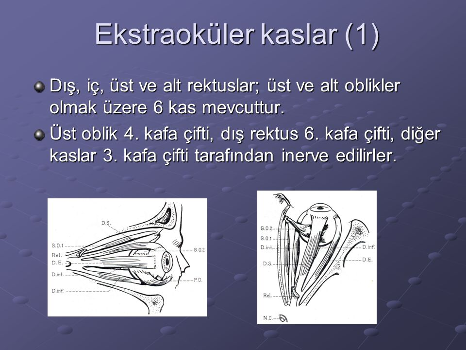 Ekstraoküler kaslar (1)