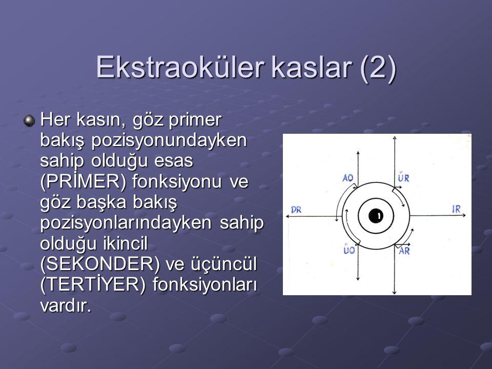 Ekstraoküler kaslar (2)