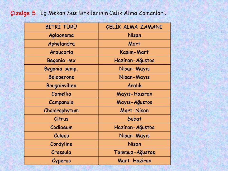 Çizelge 5. İç Mekan Süs Bitkilerinin Çelik Alma Zamanları.