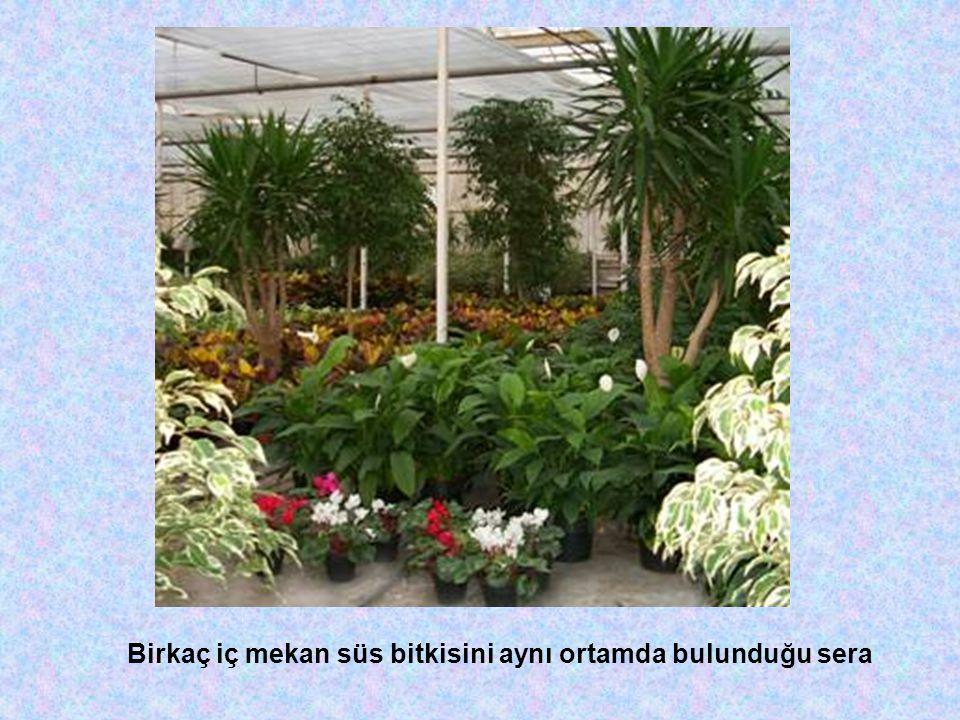 Birkaç iç mekan süs bitkisini aynı ortamda bulunduğu sera