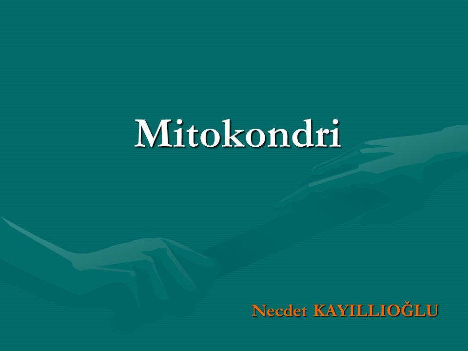 Mitokondri Necdet KAYILLIOĞLU