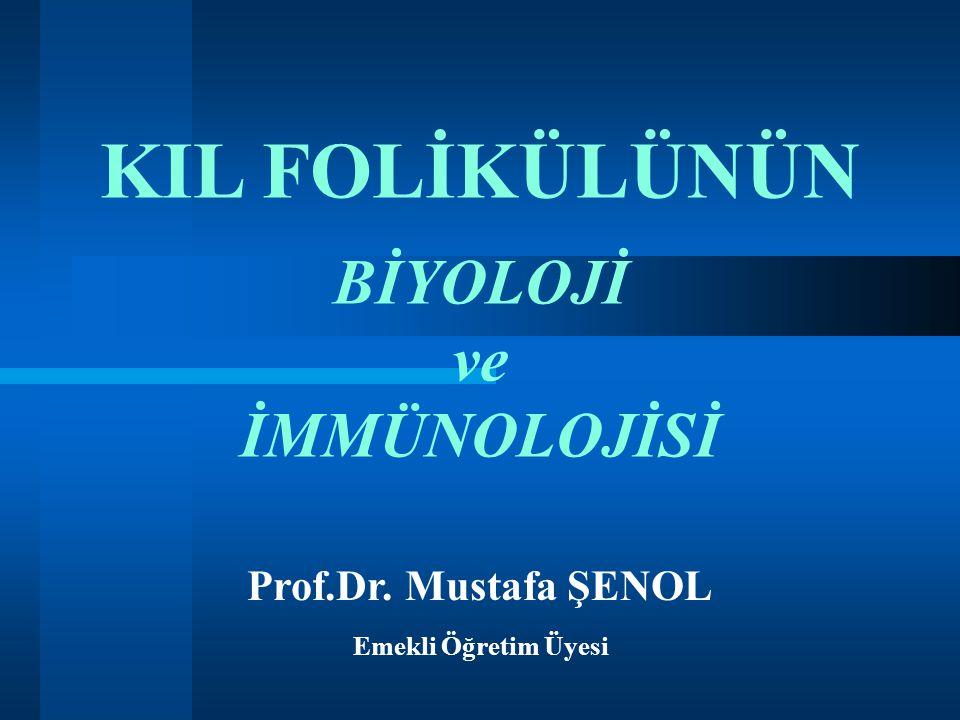 KIL FOLİKÜLÜNÜN BİYOLOJİ ve İMMÜNOLOJİSİ Prof.Dr. Mustafa ŞENOL