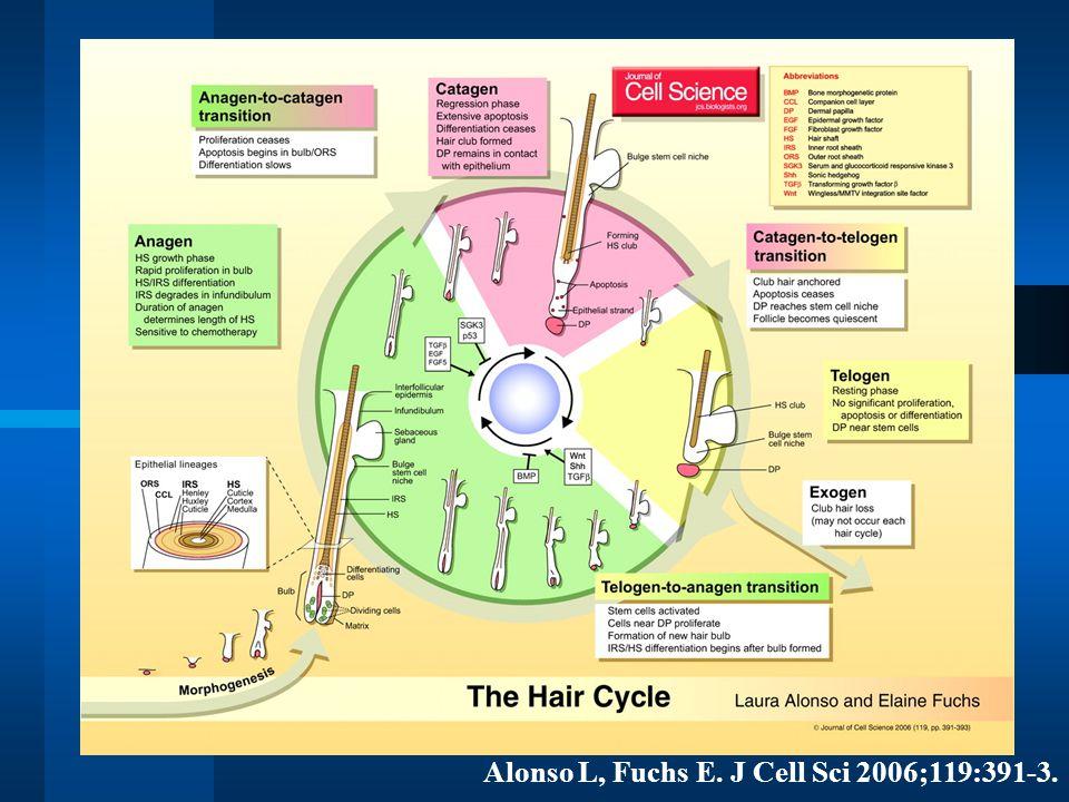Alonso L, Fuchs E. J Cell Sci 2006;119:391-3.