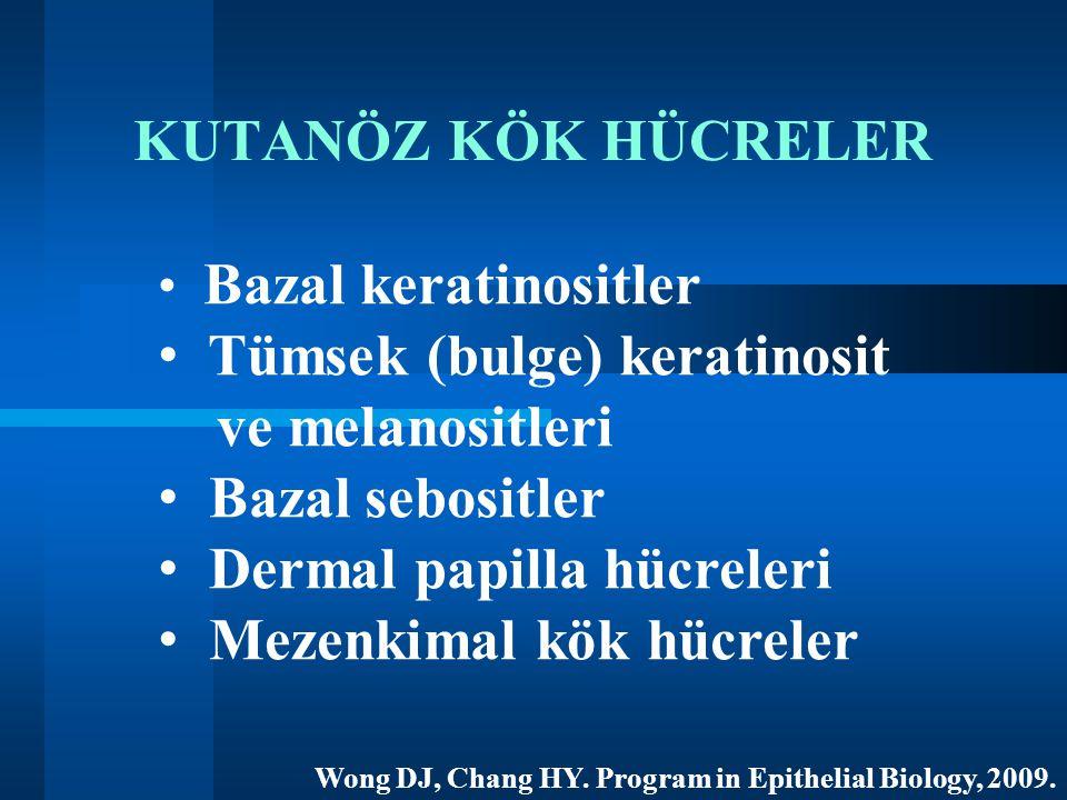 Tümsek (bulge) keratinosit ve melanositleri Bazal sebositler