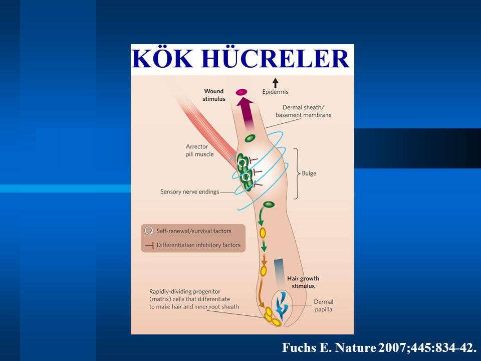 KÖK HÜCRELER Fuchs E. Nature 2007;445:834-42.