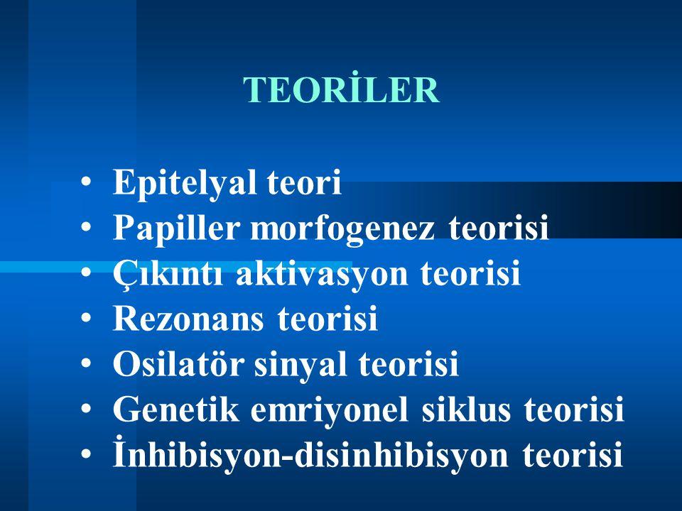 TEORİLER Epitelyal teori. Papiller morfogenez teorisi. Çıkıntı aktivasyon teorisi. Rezonans teorisi.