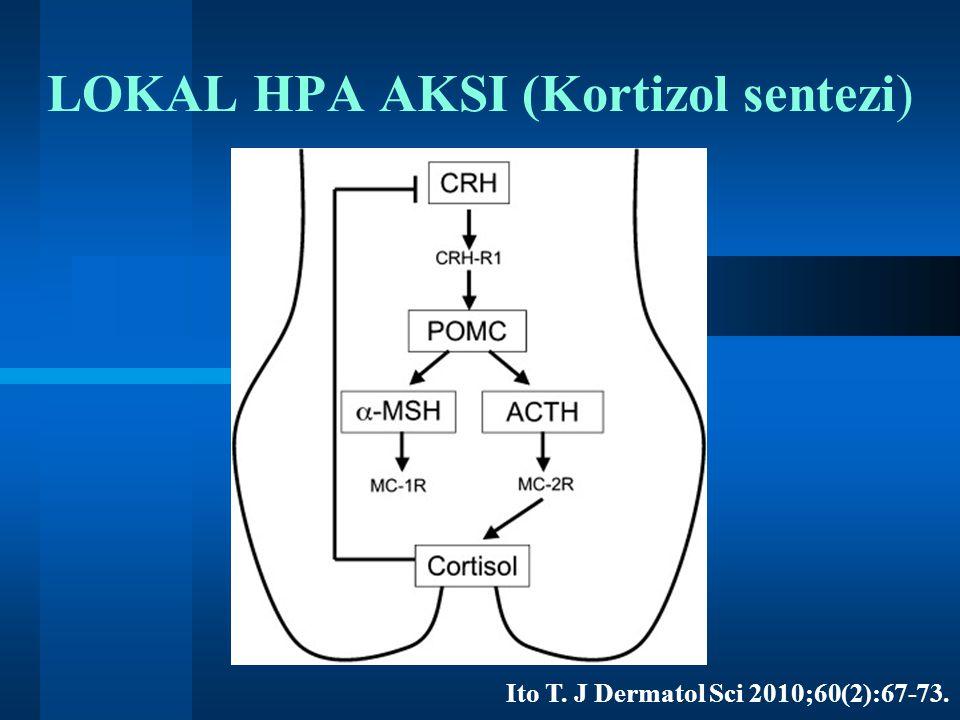LOKAL HPA AKSI (Kortizol sentezi)