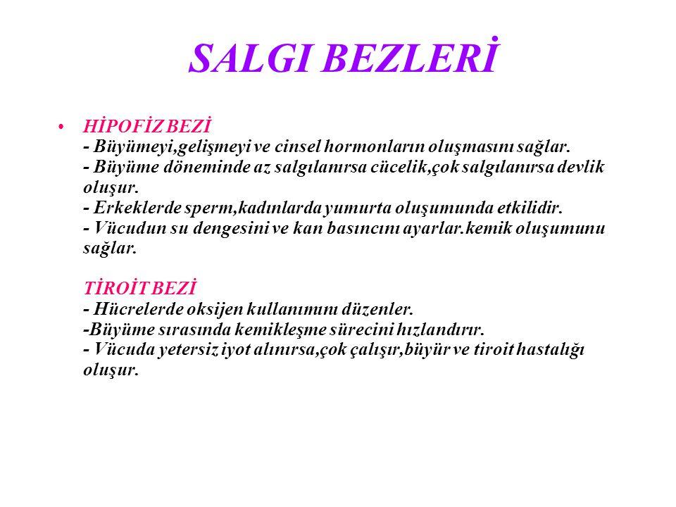 SALGI BEZLERİ