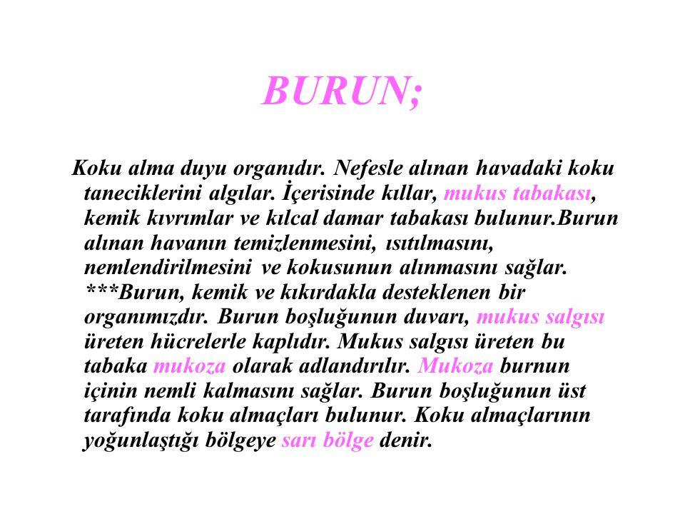 BURUN;
