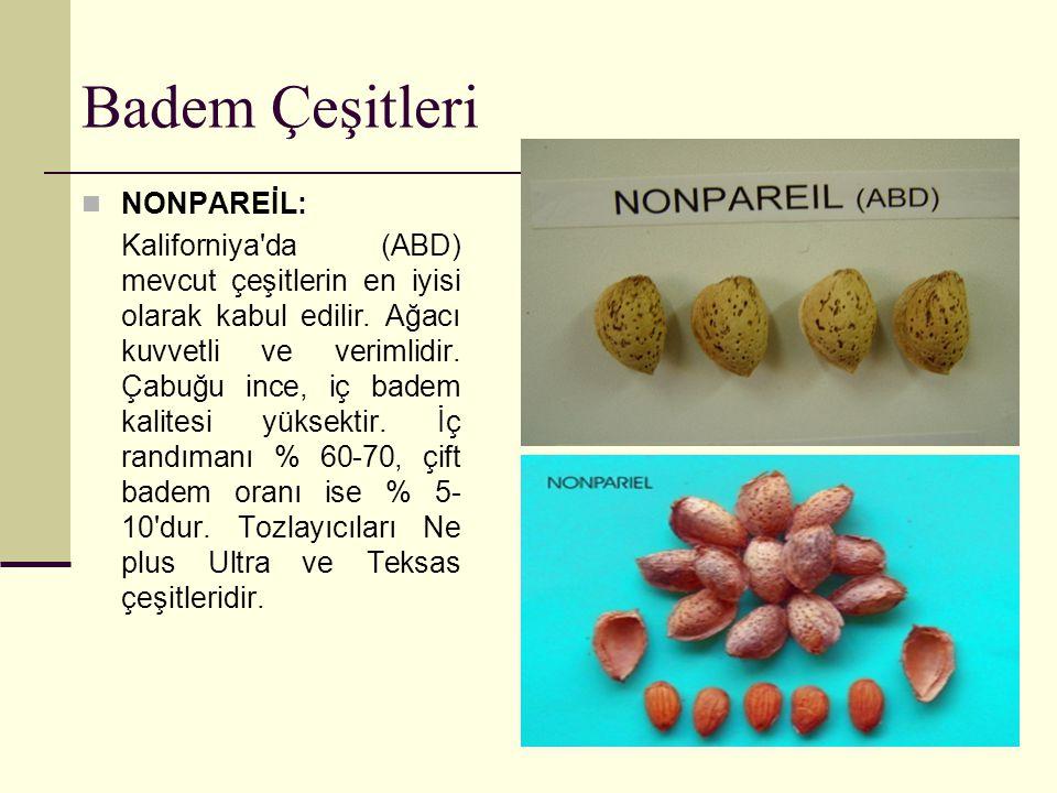 Badem Çeşitleri NONPAREİL: