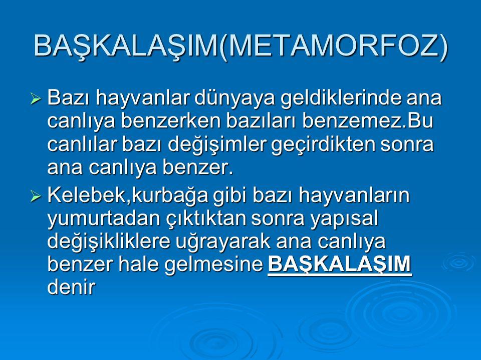 BAŞKALAŞIM(METAMORFOZ)