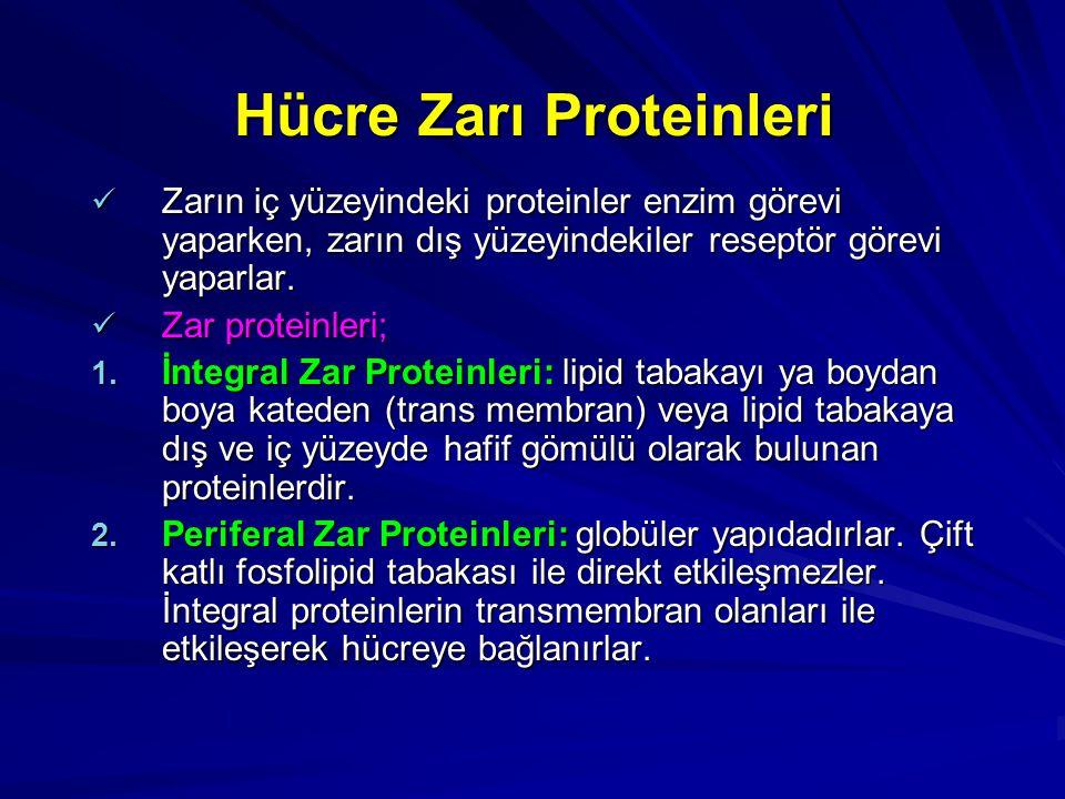 Hücre Zarı Proteinleri