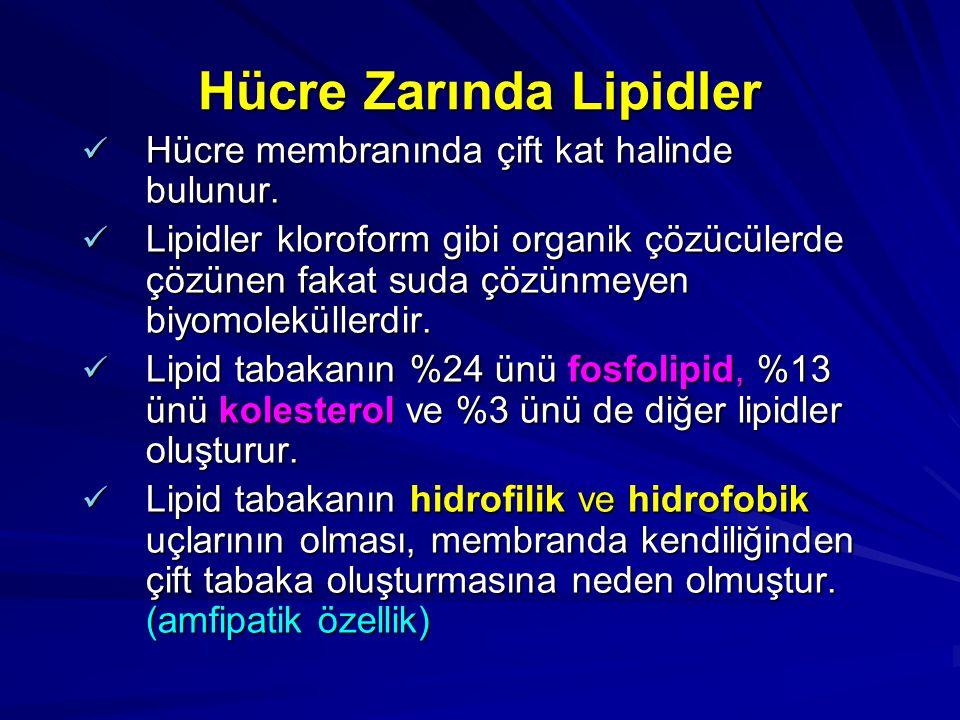 Hücre Zarında Lipidler
