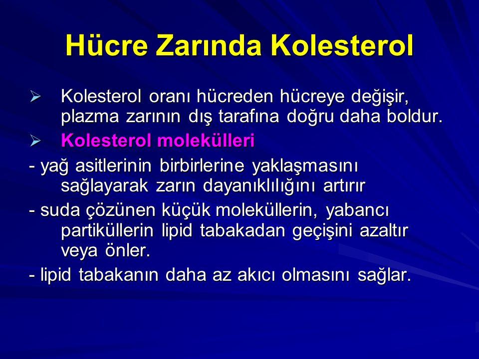 Hücre Zarında Kolesterol