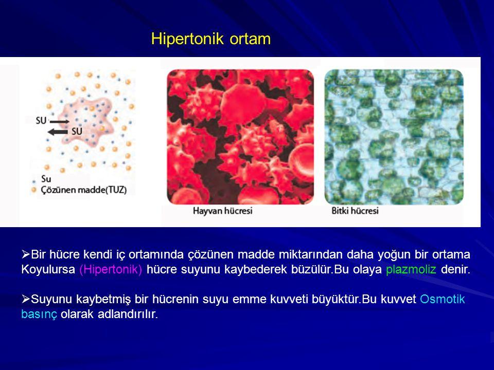 Hipertonik ortam Bir hücre kendi iç ortamında çözünen madde miktarından daha yoğun bir ortama.