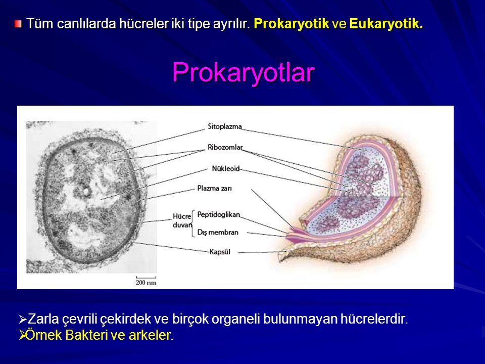 Tüm canlılarda hücreler iki tipe ayrılır. Prokaryotik ve Eukaryotik.