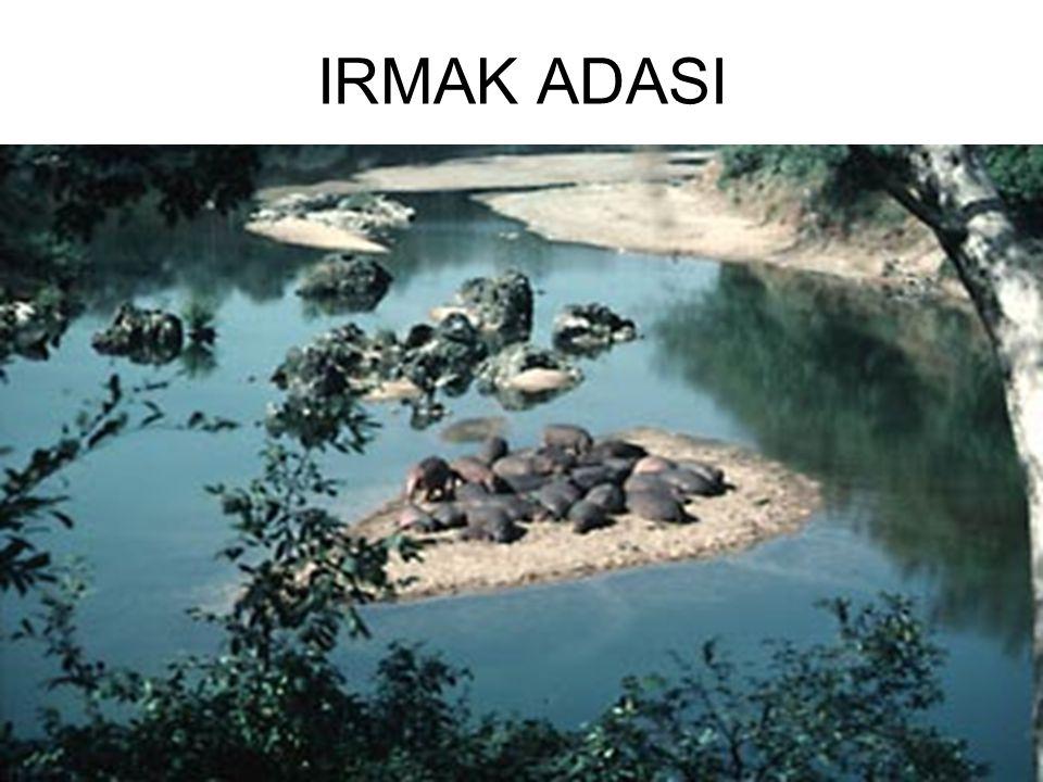 IRMAK ADASI