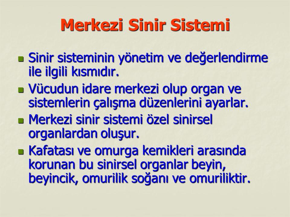 Merkezi Sinir Sistemi Sinir sisteminin yönetim ve değerlendirme ile ilgili kısmıdır.