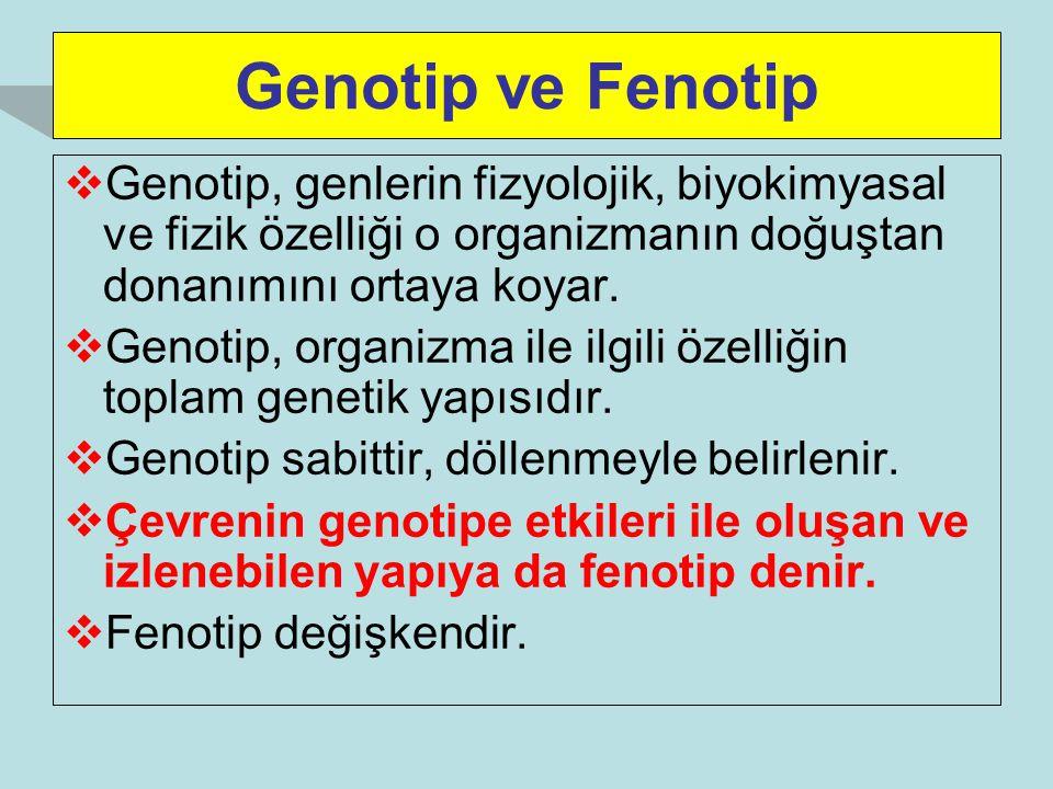 Genotip ve Fenotip Genotip, genlerin fizyolojik, biyokimyasal ve fizik özelliği o organizmanın doğuştan donanımını ortaya koyar.