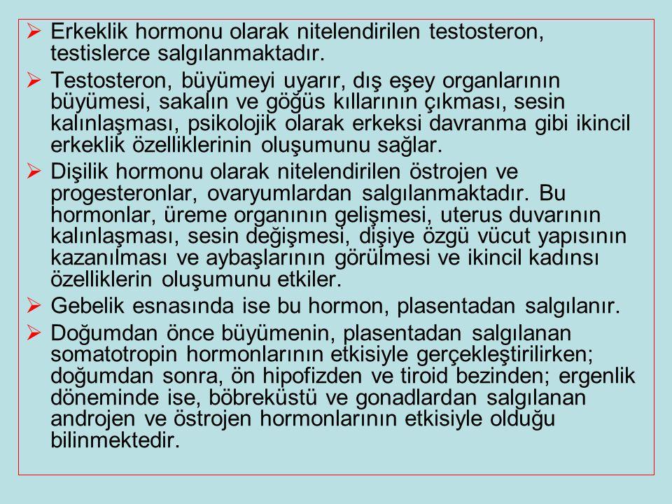 Erkeklik hormonu olarak nitelendirilen testosteron, testislerce salgılanmaktadır.