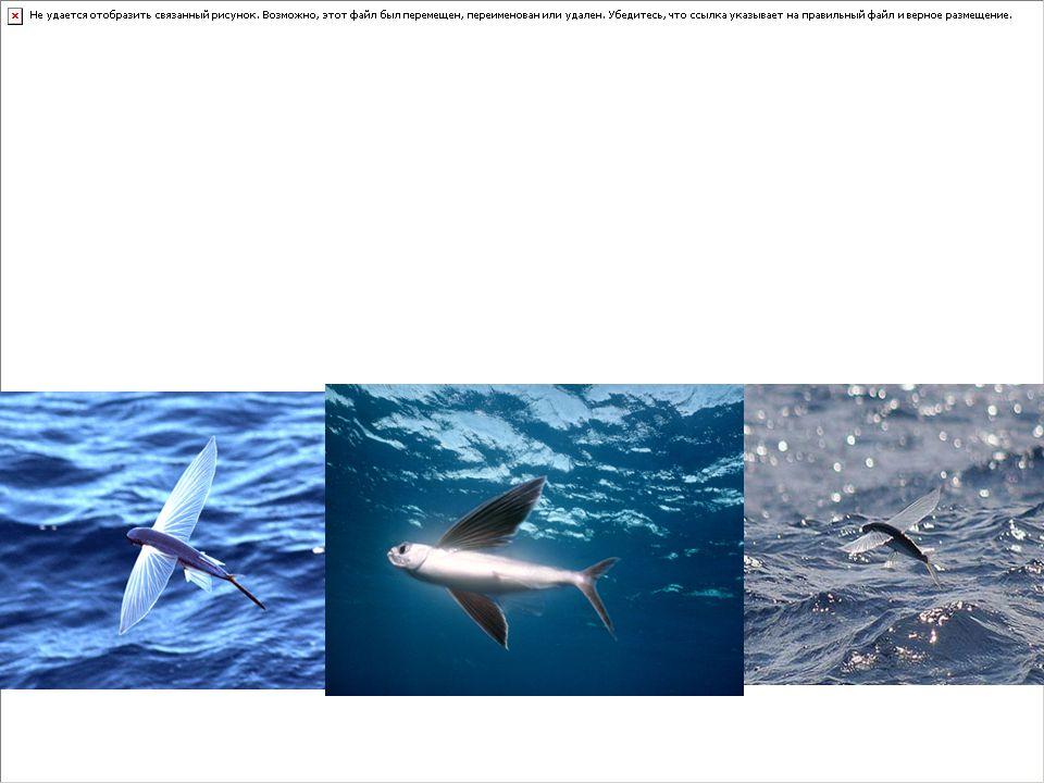 Kıkırdaklı balıklar (Chondrichthyes)