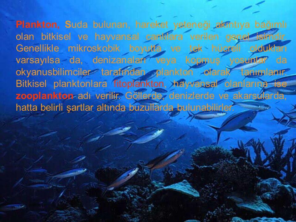 Plankton, Suda bulunan, hareket yeteneği akıntıya bağımlı olan bitkisel ve hayvansal canlılara verilen genel isimdir.
